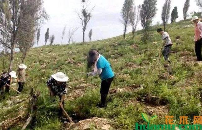 山东枣庄:抢抓时机开展雨季造林