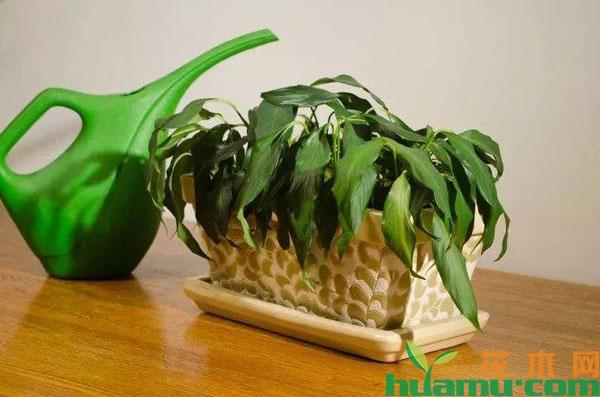 植物缺水萎蔫怎样补水?
