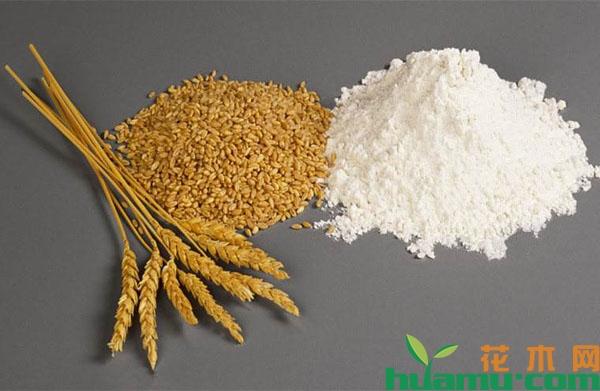 面粉涨价,小麦价格是否会被拉动?