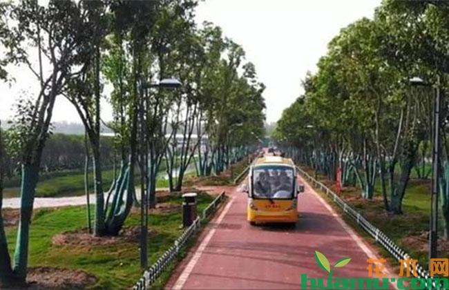 广州:以制度创新引领城市更新