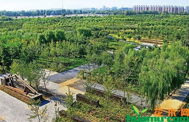 用百年老店理念提升苗木产业水平