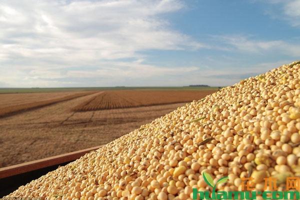 2019年大豆多少钱一斤?秋季大豆会涨价吗?