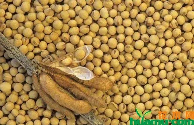 2019大豆行情怎么样?下半年大豆价格涨还是跌?