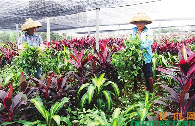 世界花卉大会聚焦品种创新与保护