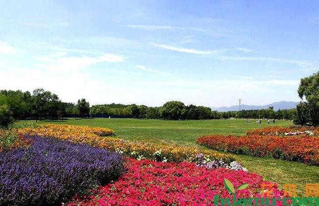全国苗木花卉年产值近4500亿元