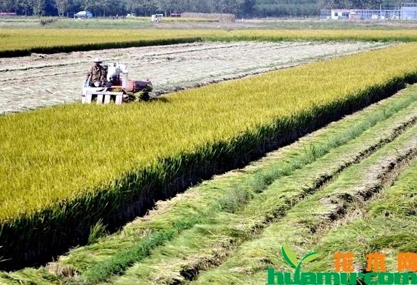 下半年粮食价格走势分析,玉米、小麦、水稻会涨价吗?