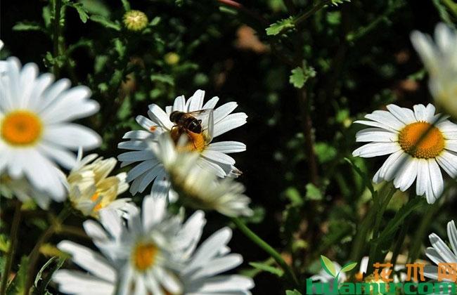 内蒙古乌兰察布:园林观花植物引种驯化工作初具效果