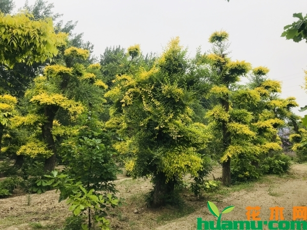 新疆:苗博会打通供需平台 促进苗木产业发展