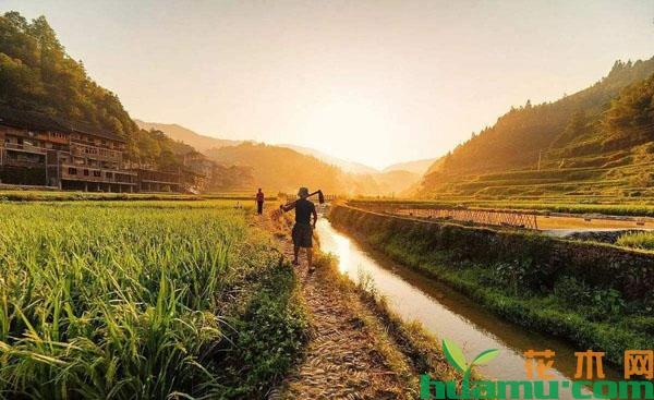 农村土地补贴下发,有5类农民无法领取补贴