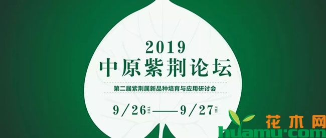 2019中原紫荆论坛,精彩值得期待!.jpg