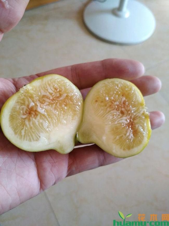 新疆无花果怎么样?新疆早黄无花果苗多少钱一棵?