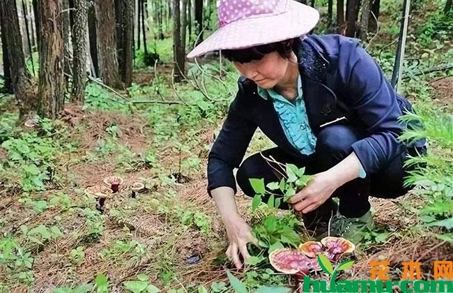 贵州省16个深度贫困县集中推进林下经济示范项目