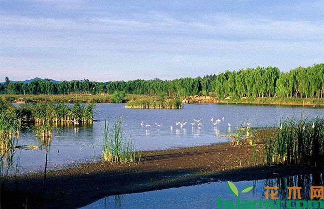 首都特色湿地保护体系形成