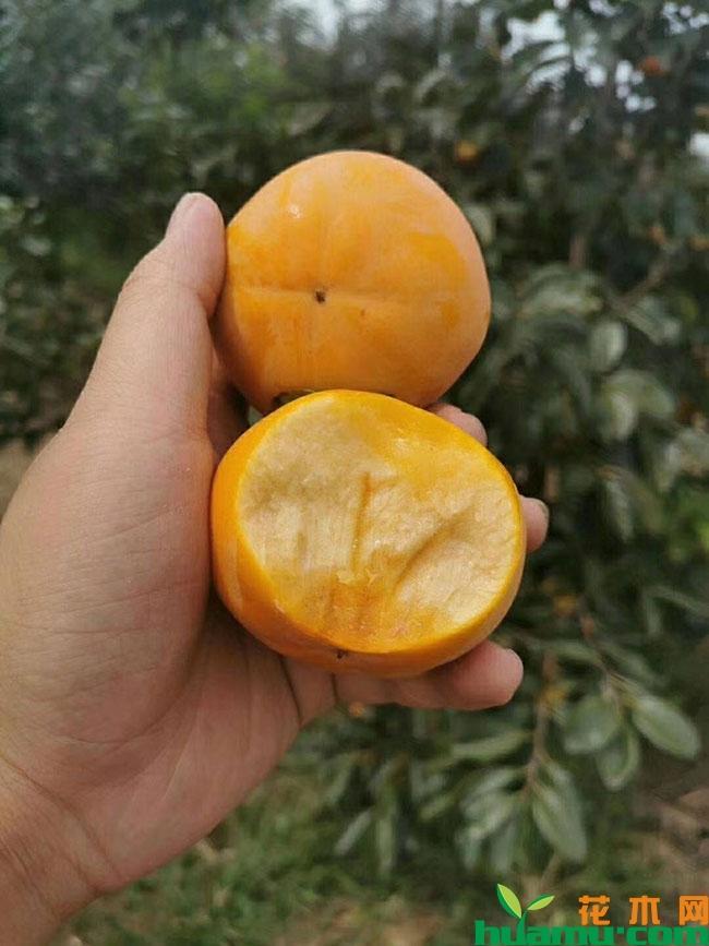 柿子的产地有哪些地方?柿子产地哪里的最好?