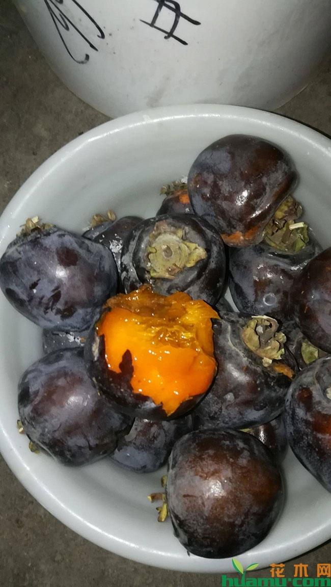 黑柿子有几个品种?黑柿子树苗几年结果?