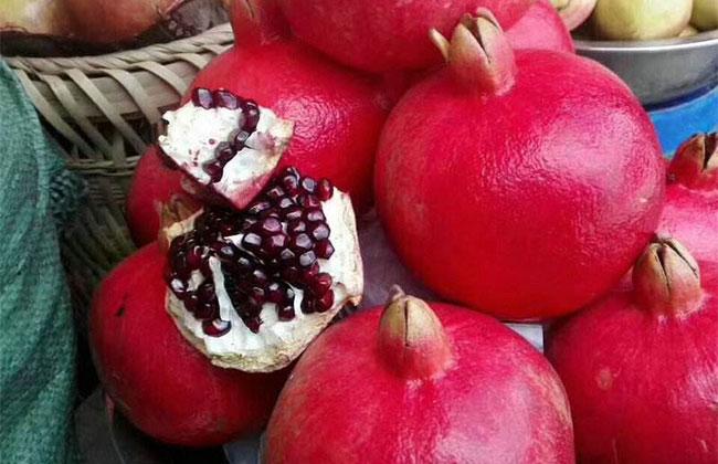 黑籽甜石榴树苗价格多少钱一棵?黑籽甜石榴种植前景如何