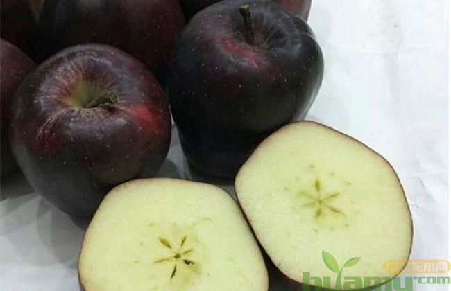黑钻苹果几年苗结果