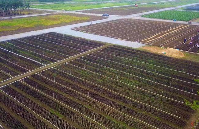 """河南省14个单位被授予""""全国绿化模范单位""""称号"""