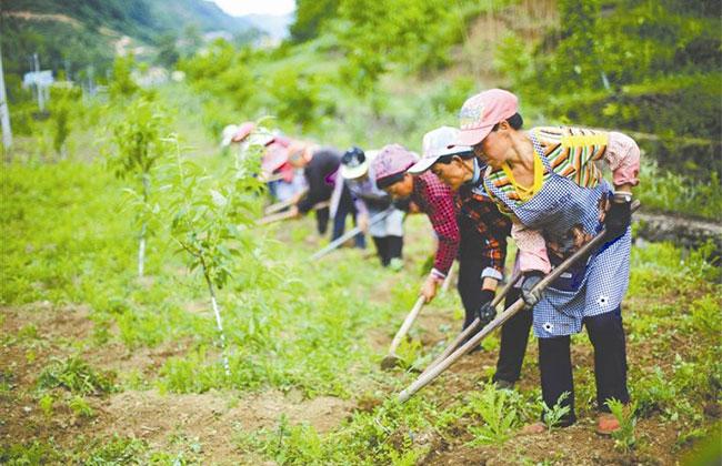 苗木基地土壤改良怎么做?