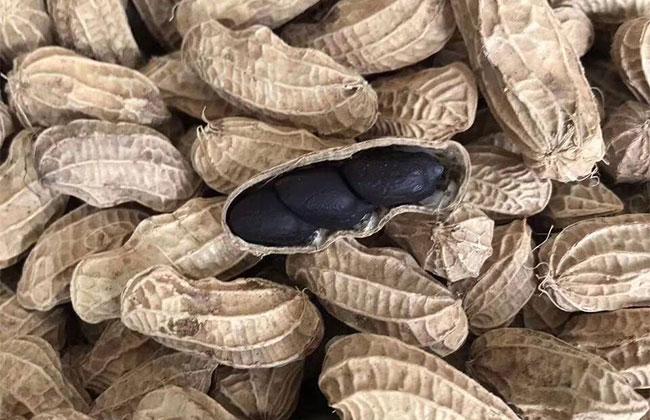 黑花生市场行情怎么样?黑花生可以种植吗?