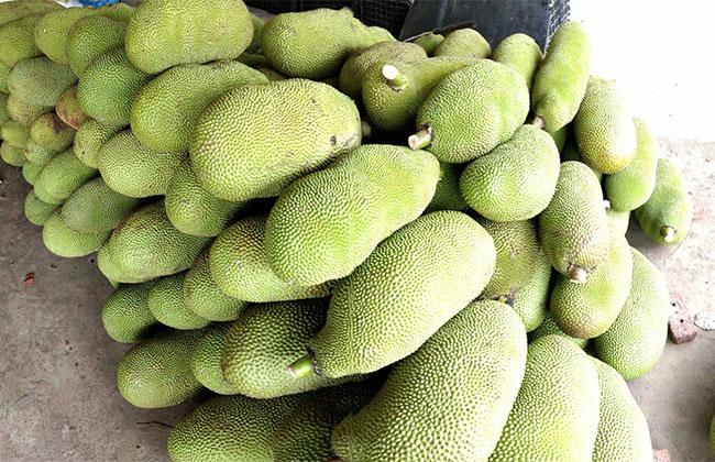 菠萝蜜多少钱一斤?菠萝蜜发展种植怎么样?