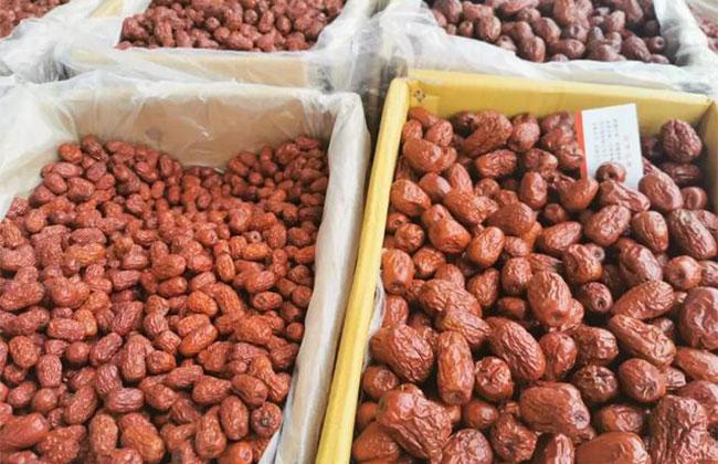 越做越大的枣生意和越种越小的枣园子