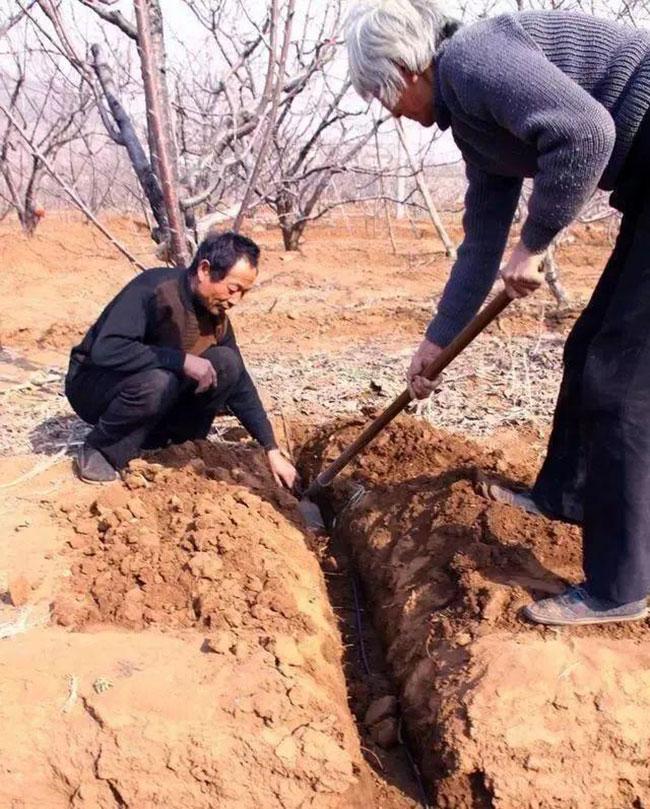 果树最适合的施肥方法