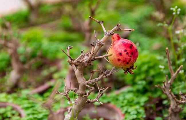 家里种上5种果树,秋天有果子吃还能观赏