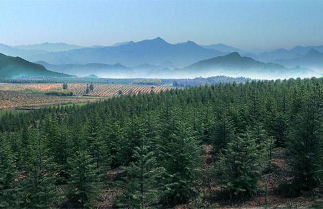 安徽创建全国林长制改革示范区