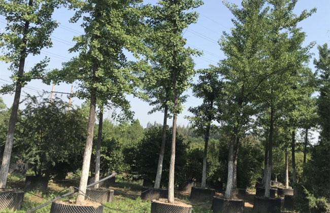 国有林场转型发展看吉林