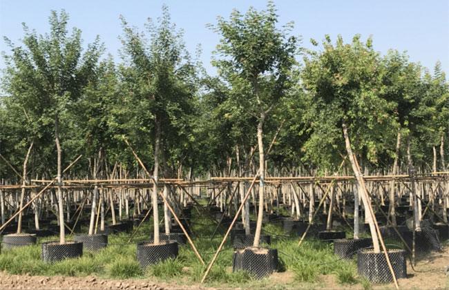 去年陕西林业产业总产值1319亿元