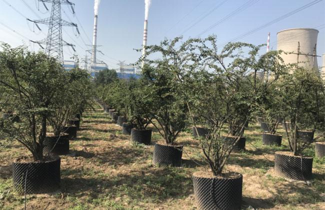 陕西林业发布70年十大建设成就