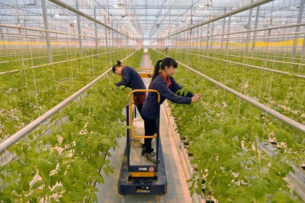 农村这5种职业正在兴起,致富首选,比打工强太多!