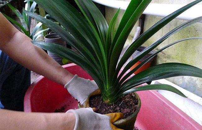 花盆底部垫泡沫,这样栽植的花卉不烂根不黄叶
