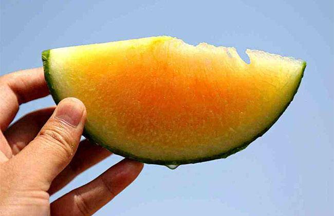 彩虹西瓜的种植前景分析