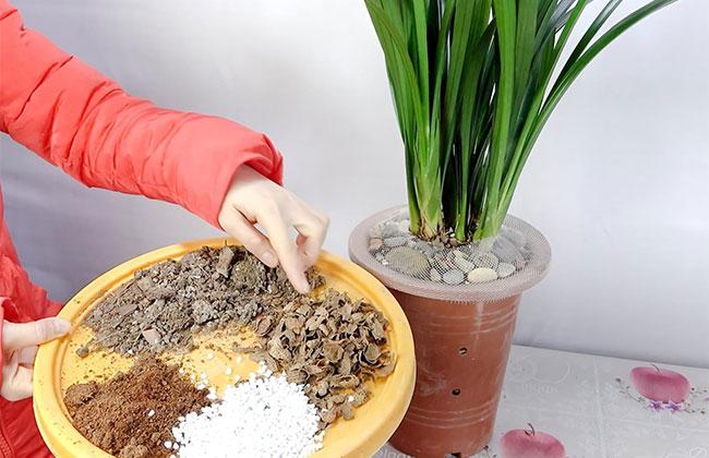 冬季养花施点抗冻肥