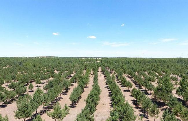 广东省完成造林更新311.53万亩
