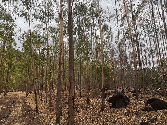 [林业扶贫]在保护生态中脱贫致富