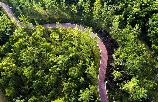 广东省召开造林和生态修复现场会 