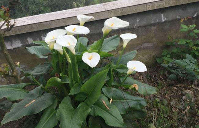 这几种花卉怕见光,养护管理要注意!