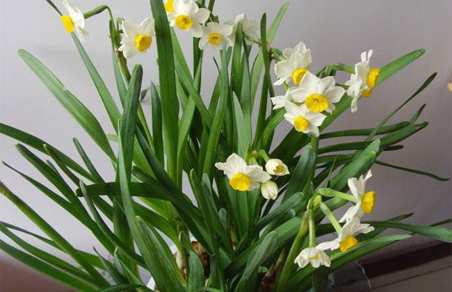 这几种花卉冬季开花,现在种还不晚!
