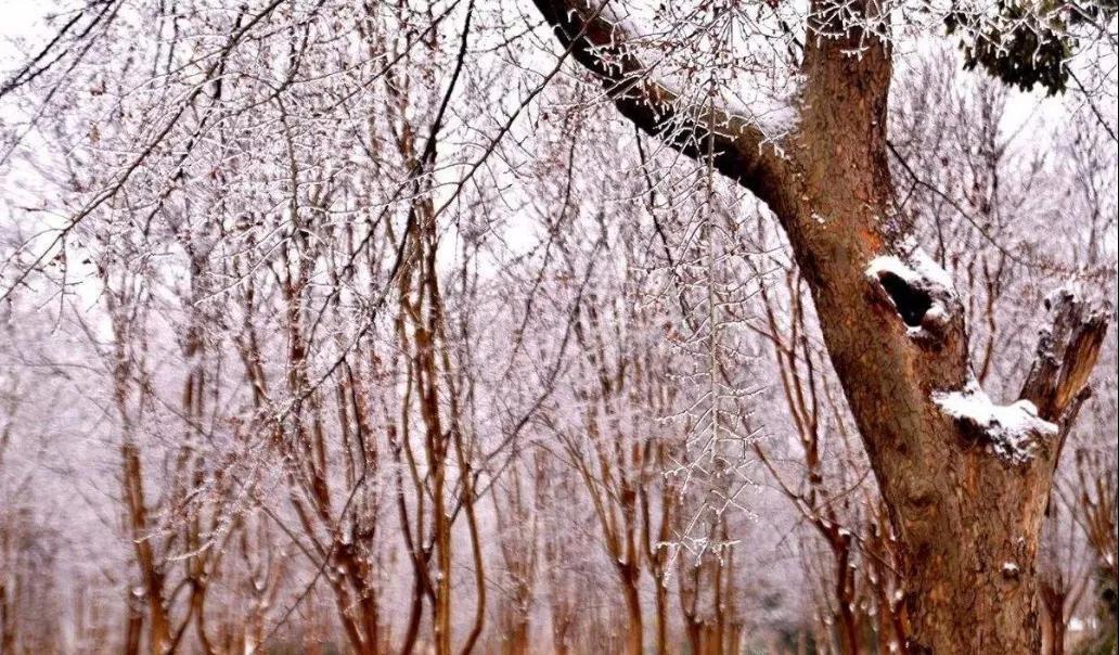 耐寒树种原本就耐寒吗?冬季苗木养护方法