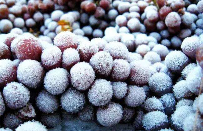 冰葡萄的种植前景怎么样?