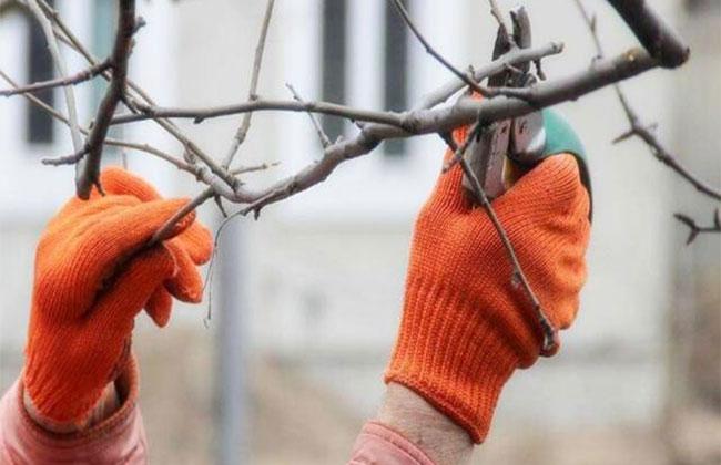 冬季清园该怎么做?