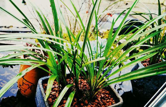 兰花冬季养殖方法