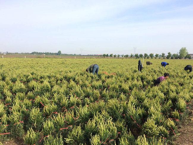 """森林覆盖面积达2.12亿公顷 中国成为全球""""变绿""""主力军"""