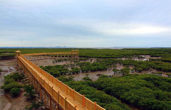 海南计划到2025年新增红树林面积3万亩