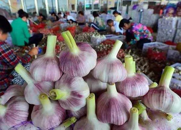 大蒜批发价格和超市里的价格相差很远,农民种大蒜真的赚钱吗?