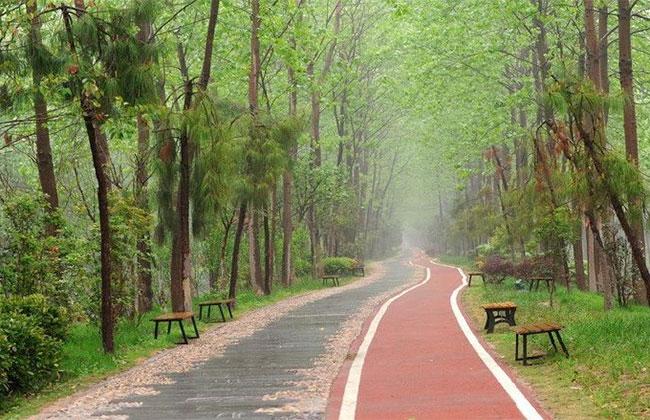 2020年广东全域建设国家森林城市