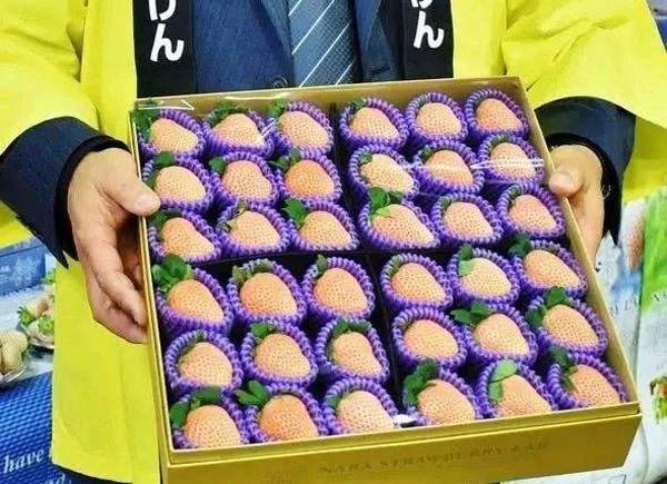 日本天价草莓1颗900元,日本草莓到底有啥不同?